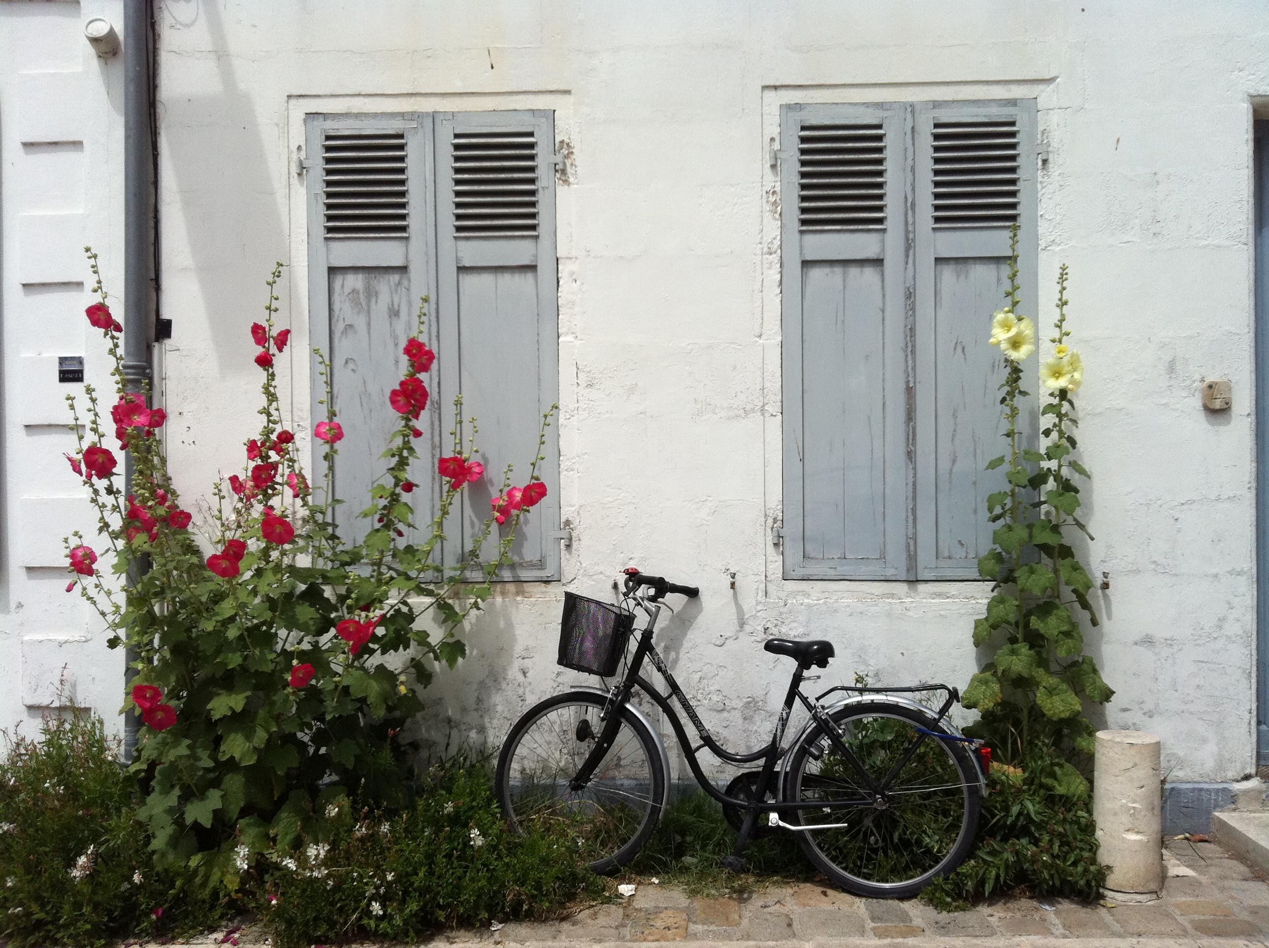 Les roses tr mi res de l le de r le 1bis epicerie fine ile de r - Planter des roses tremieres ...